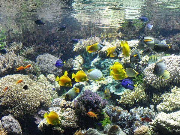 Cr er un aquarium d 39 eau de mer for Achat aquarium eau de mer